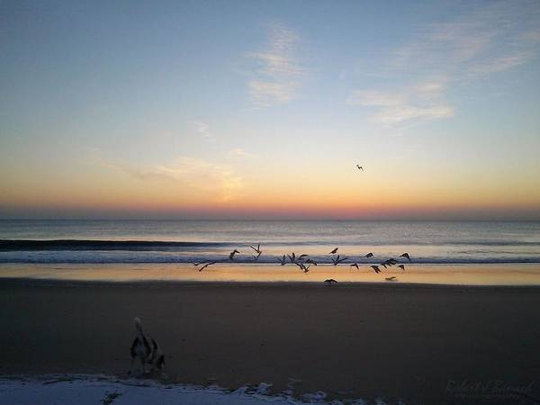 Photograph - Beagle Birds Coming Dawn by Robert Banach