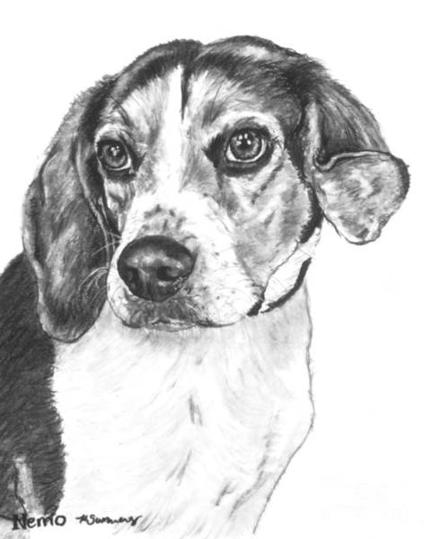 Drawing - Beagle Charcoal Drawing by Kate Sumners