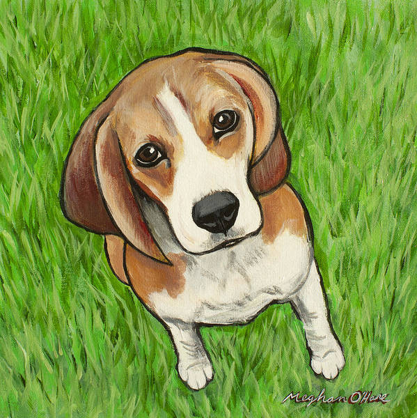 Painting - Beagle  by Meghan OHare