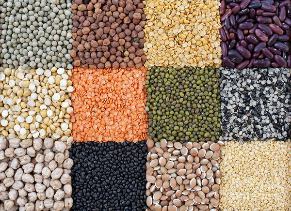 Wall Art - Photograph - Beans And Pulses by Tim Gainey