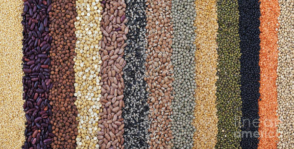 Wall Art - Photograph - Beans And Pulses Pattern by Tim Gainey