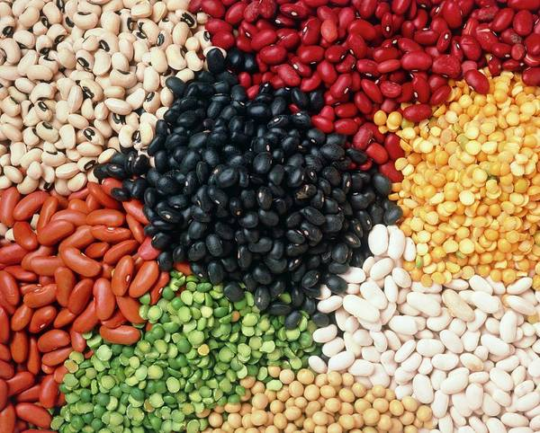 Pulse Photograph - Beans And Pulses by Seth Joel/science Photo Library