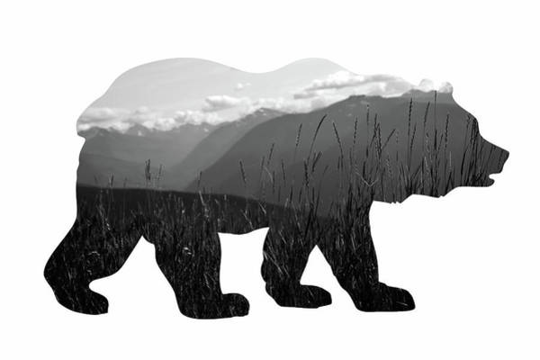 Fall Photograph - Bear by Amber Berninger