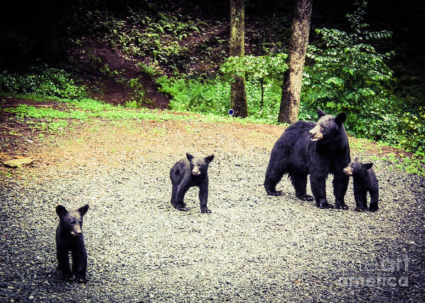 Photograph - Bear Family Affair by Jan Dappen