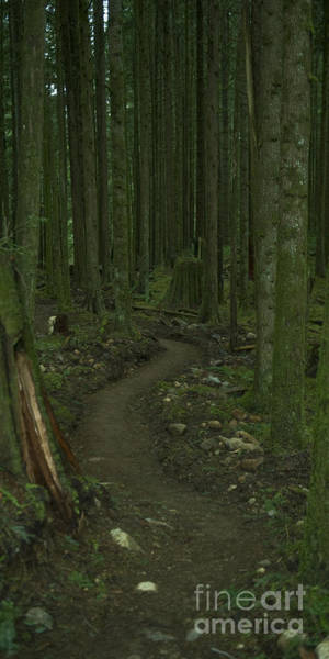 Mission Bc Photograph - Bear Mountain Trail by Rod Wiens