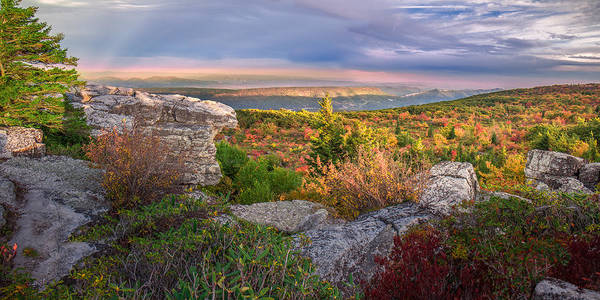Photograph - Bear Rocks Dolly Sods by Mary Almond