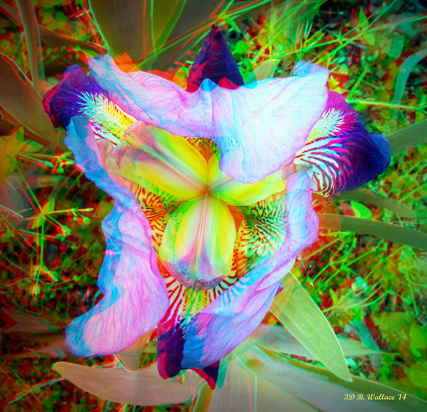 Wall Art - Photograph - Bearded Iris Cultivar - Use Red-cyan 3d Glasses by Brian Wallace
