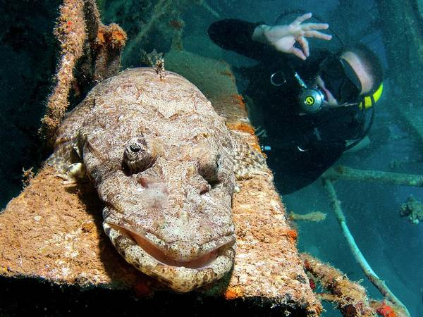 Ocean Life Photograph - Beaufort's Crocodile Fish by Photostock-israel/science Photo Library