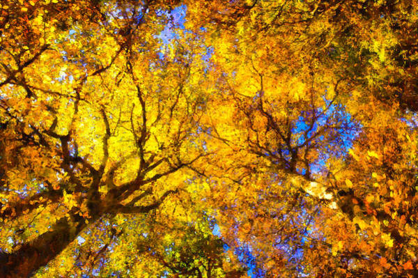 Painting - Beautiful Autumnal Trees Yellow Orange Digital Painting by Matthias Hauser