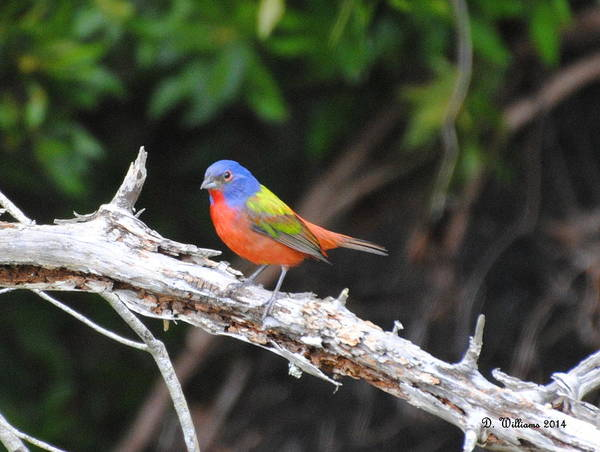 Photograph - Beautiful Bird by Dan Williams