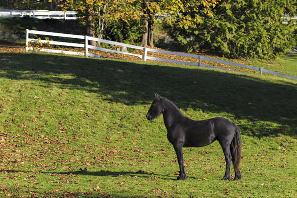 Photograph - Beautiful Black Horse by Paul W Sharpe Aka Wizard of Wonders