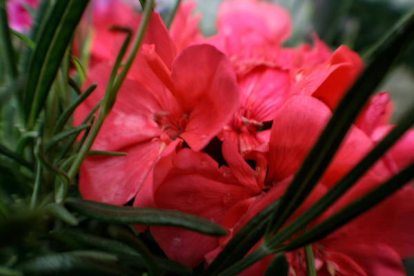 Photograph - Beautiful Blossoms Of Bloom by Doc Braham