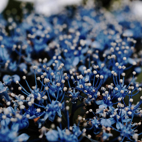Selective Focus Photograph - Beautiful Blue Flower by Sner3jp