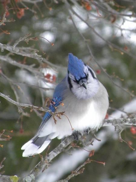 Photograph - Beautiful Blue by Peggy  McDonald