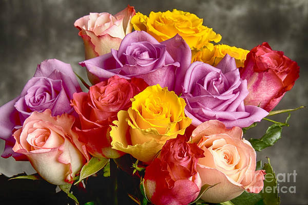 Photograph - Beautiful Bouquet Of Multicolor Roses by James BO Insogna