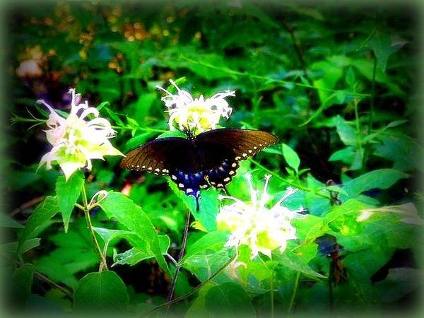 Photograph - Beautiful Butterfly by Lisa Wooten