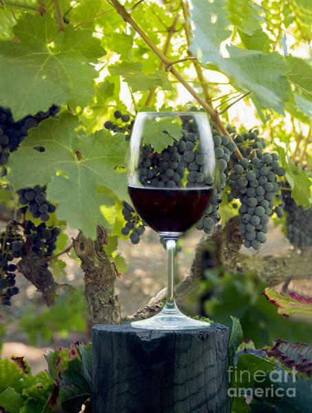 Wine Barrels Photograph - Beautiful Cabernet by Jon Neidert