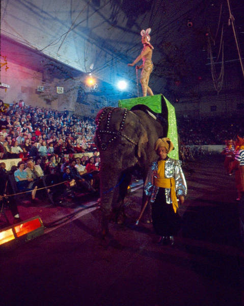 Trainer Photograph - Beautiful Circus Entertainer Rides Elephant by Retro Images Archive