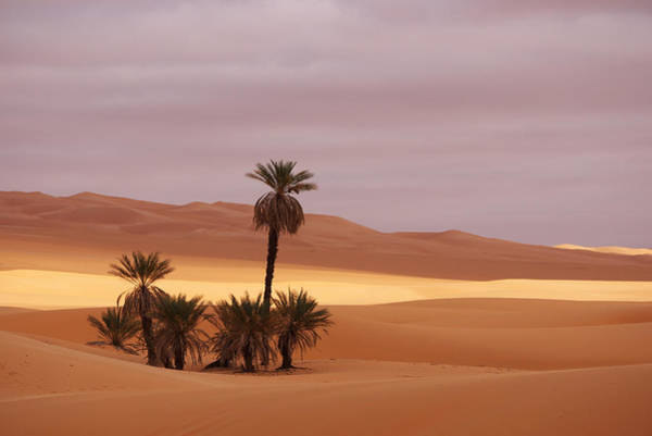 Photograph - Beautiful Desert by Ivan Slosar