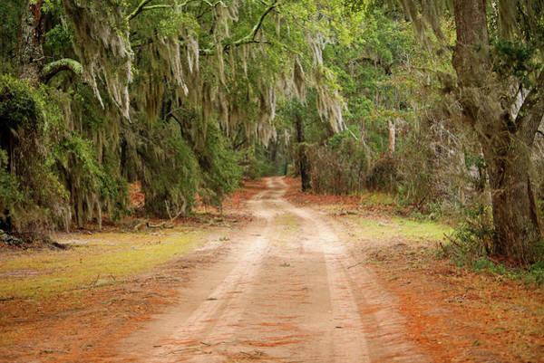Between The Trees Photograph - Beautiful Dirt Road by Daniela Duncan