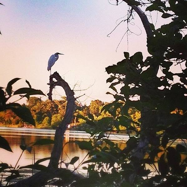 Egret Photograph - Beautiful Egret Watching The Lake by Betsy Nelson