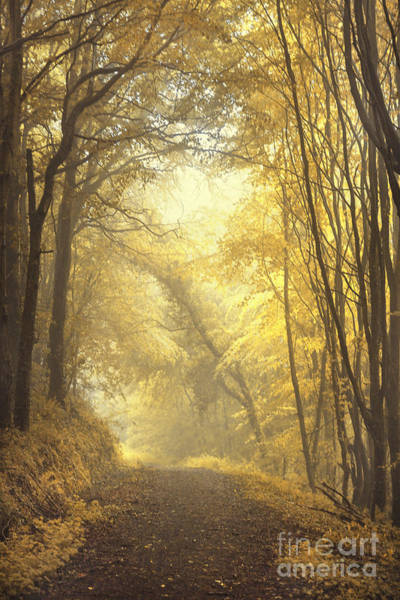Atmospheric Wall Art - Photograph - Beautiful Fall by Evelina Kremsdorf