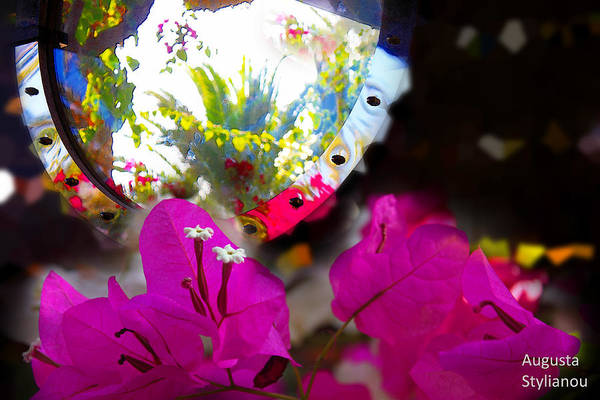 Photograph - Beautiful Flowers In Reflection by Augusta Stylianou