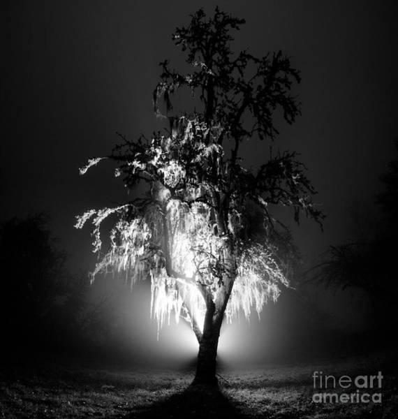 Photograph - Beautiful Foggy Night 1 by Michael Cross