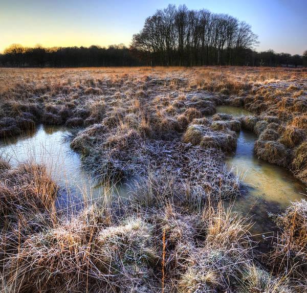 Fern Frost Photograph - Beautiful Frozen Field Winter Landscape With Frosty Grass by Matthew Gibson