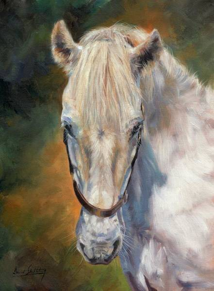 White Stallion Wall Art - Painting - Beautiful Gem by David Stribbling
