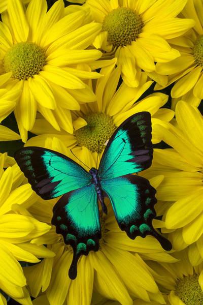 Wall Art - Photograph - Beautiful Green Butterfly by Garry Gay