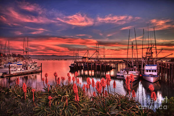 Beautiful Harbor Art Print