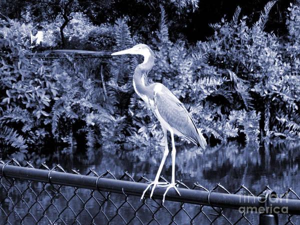 Photograph - Beautiful Heron  by Oksana Semenchenko