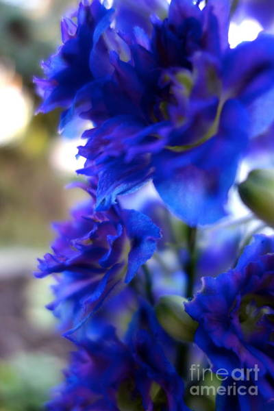 Photograph - Beautiful In Blue by Jacqueline Athmann