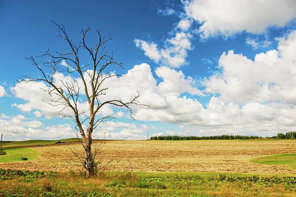 Skane Photograph - Beautiful Landscape by Knape