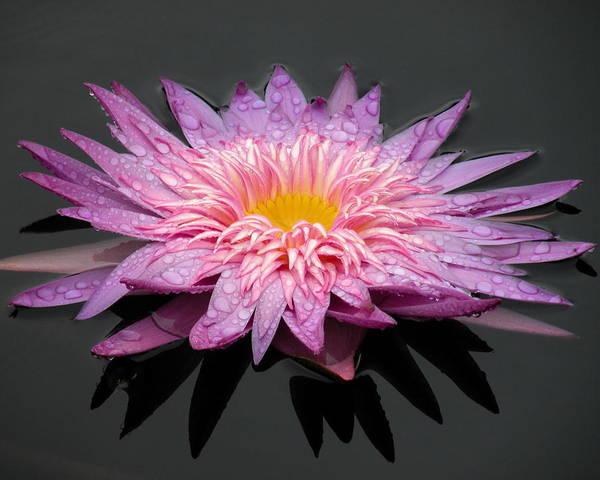 Bemis Photograph - Beautiful Lily by Kim Bemis