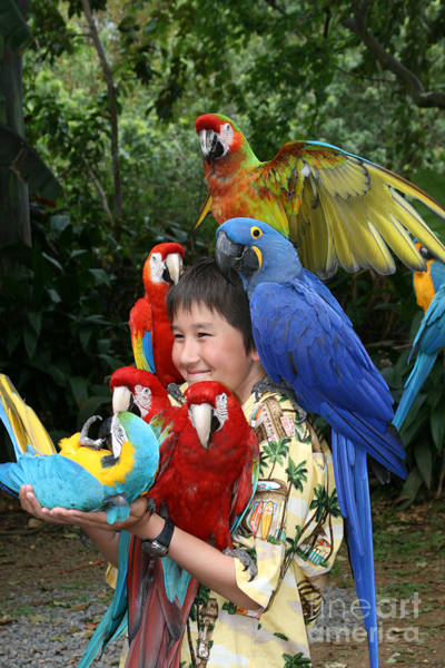 Photograph - Beautiful Macaw - Garden Of Eden Puohokamoa Valley Maui Hawaii by Sharon Mau