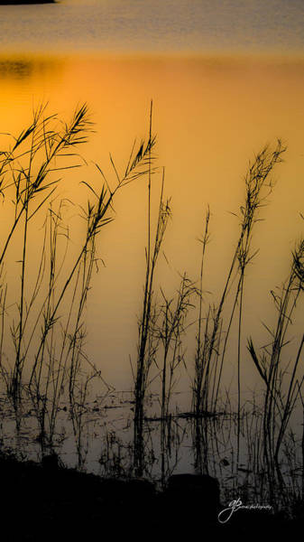 Digital Art - Beautiful Nature by William Arenas