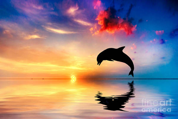 Dolphin Photograph - Beautiful Ocean And Sunset With Dolphin Jumping by Michal Bednarek