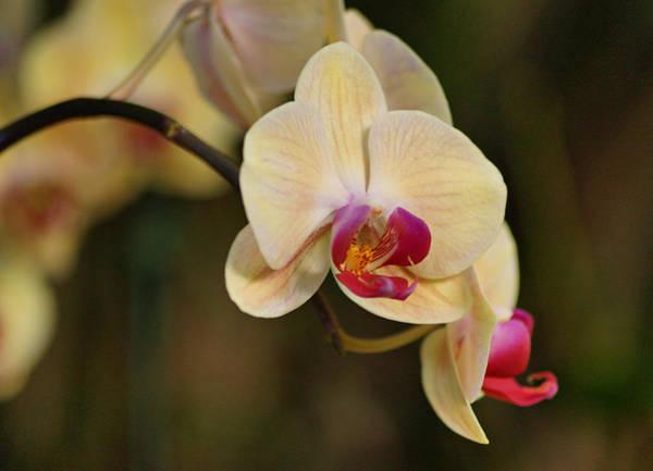Photograph - Beautiful Orchid by Sandy Keeton