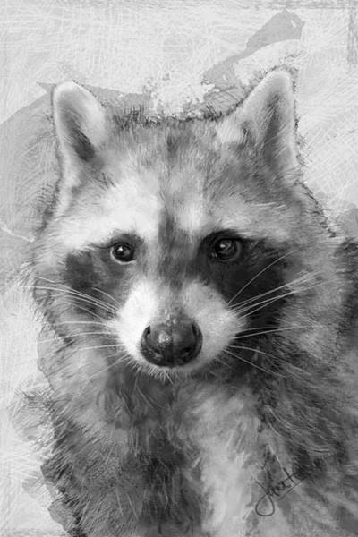 Mixed Media - Beautiful Raccoon by Janet Garcia