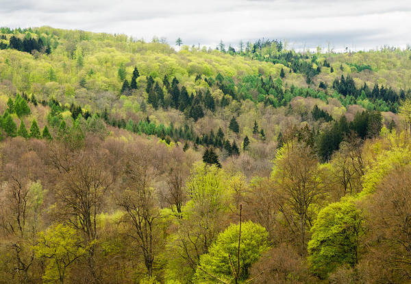 Photograph - Beautiful Spring Forest - Many Shades Of Green by Matthias Hauser