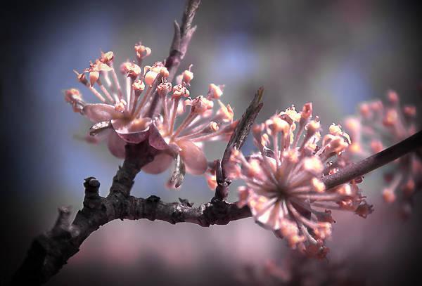 Photograph - Beautiful Spring by Milena Ilieva
