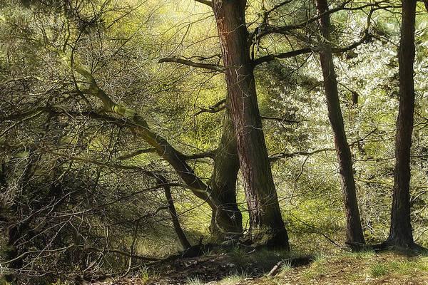 Photograph - Beautiful Spring Trees by Danuta Antas Wozniewska