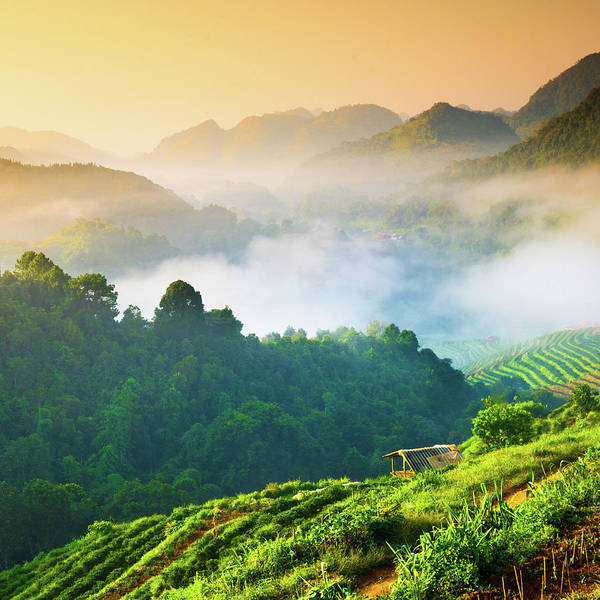Strawberry Hills Wall Art - Photograph - Beautiful Sunshine At Misty Morning by Primeimages
