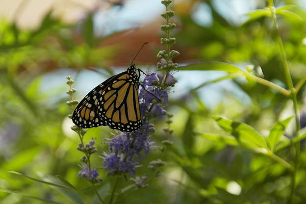 Living Things Photograph - Beautiful Swallowtail by Jeff Swan