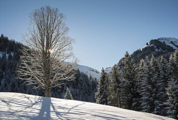 Photograph - Beautiful Tree In Snowy Landscape On A Sunny Winter Day by Matthias Hauser