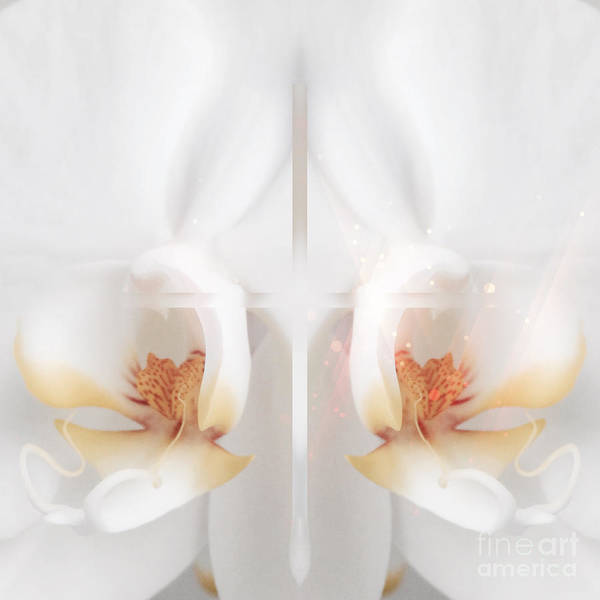 Digital Art - Beautiful White Orchids by Beverly Claire Kaiya