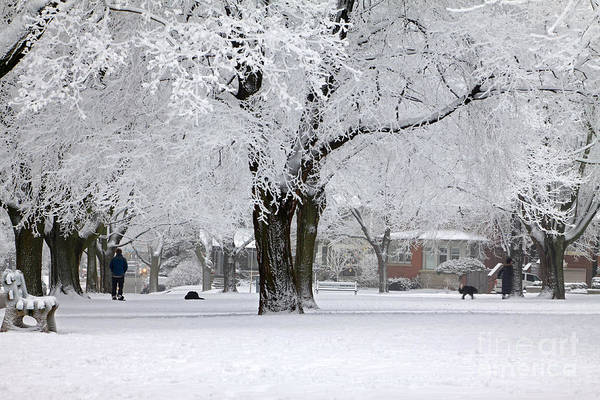 Wall Art - Photograph - Beautiful Winter Park by Charline Xia
