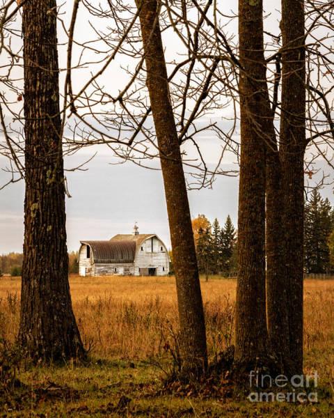 Photograph - Beautifully Weathered by Lori Dobbs